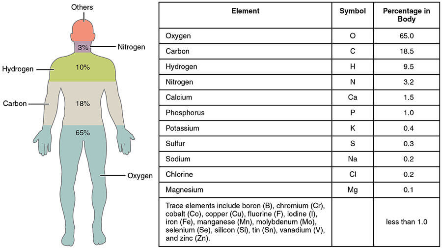 first image showing human body chemical composition